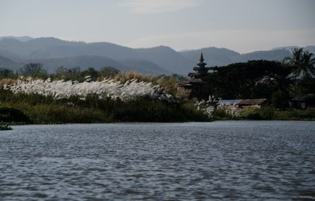 Inle Landscapes