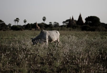 Landscapes of Bagan